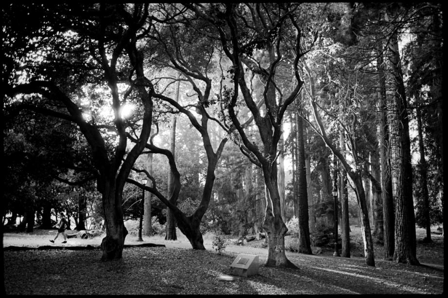 A Walk In Trees